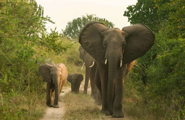 We are The Best Tour And Travel Company in Africa. Wild Excursions is a community-based safari company in Uganda, offering affordable safaris and holidays to all tourist attractions across East Africa.
