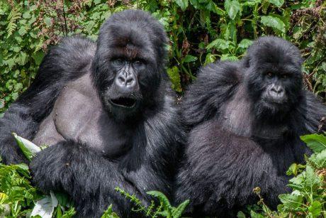 Wild Excursions Uganda