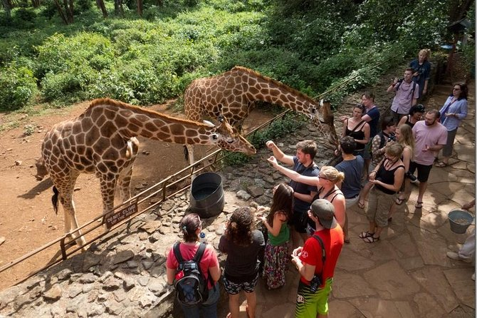 Wild Excursions Uganda The Best Tour Company